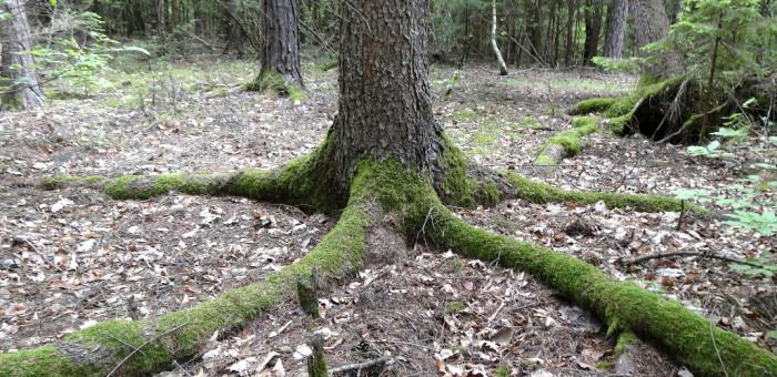 wood-360704_1920
