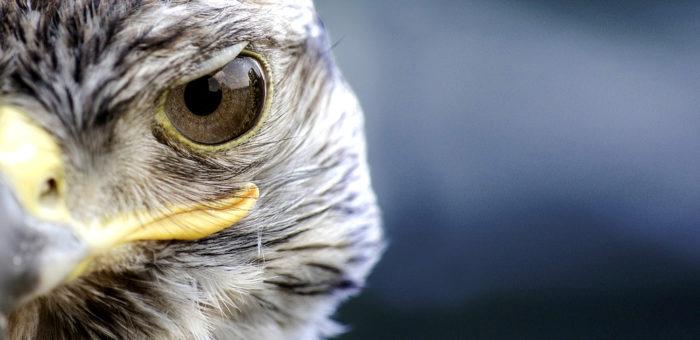 bird-359143_1280